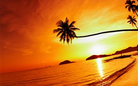 Tropical beach sunset, palm tree, Thailand HD wallpaper
