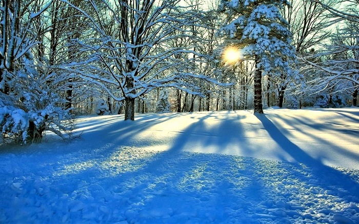 Winter, snow, trees, sun rays Wallpapers Pictures Photos Images