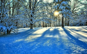 Winter, snow, trees, sun rays HD wallpaper