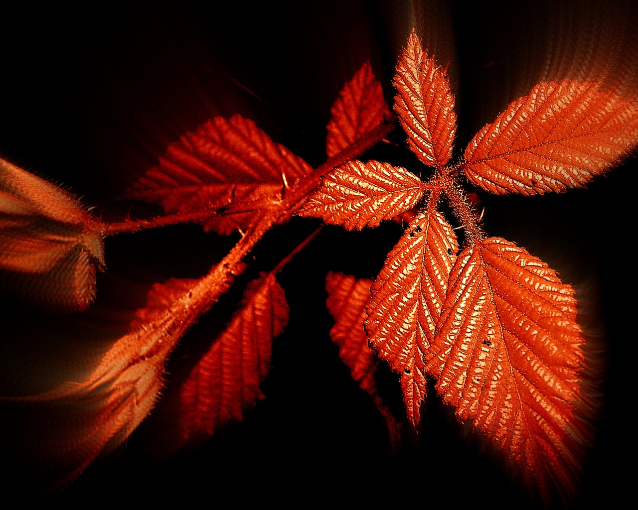 Autumn, red leaves, black background 1280x1024 wallpaper