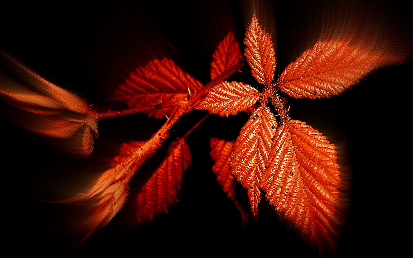 Autumn, red leaves, black background 1680x1050 wallpaper