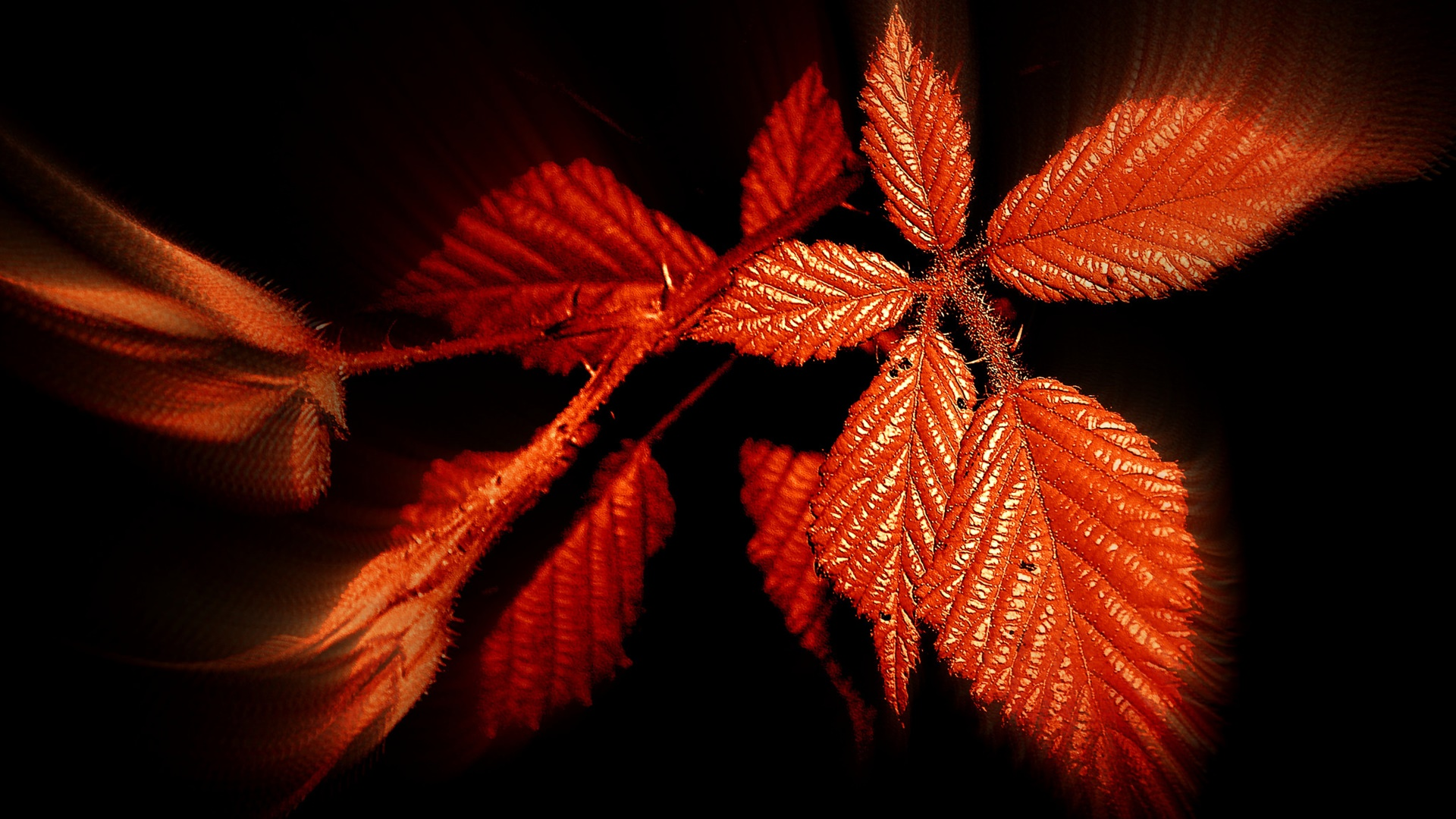 Autumn, red leaves, black background 1920x1080 wallpaper