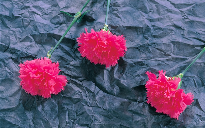 Carnations, pink flowers Wallpapers Pictures Photos Images