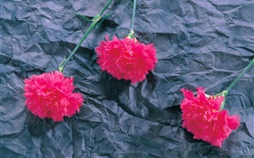 Carnations, pink flowers