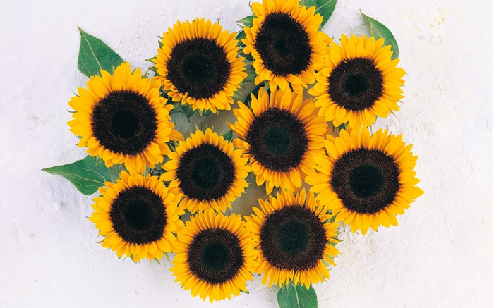 Many sunflowers Wallpapers Pictures Photos Images