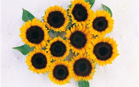 Many sunflowers HD wallpaper