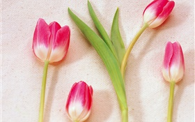 Pink white petals tulips HD wallpaper
