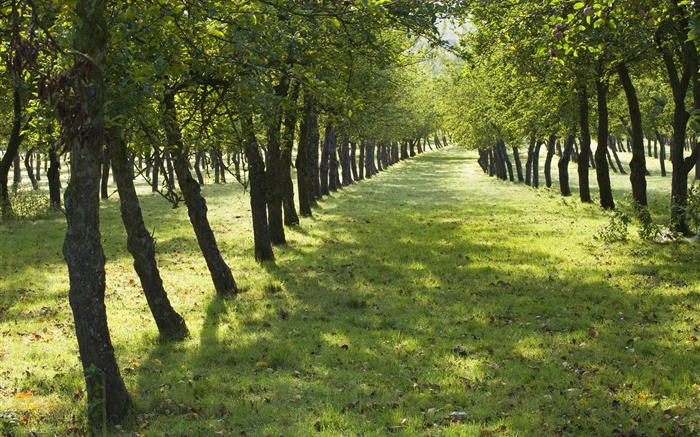 Summer, trees, road, green grass Wallpapers Pictures Photos Images