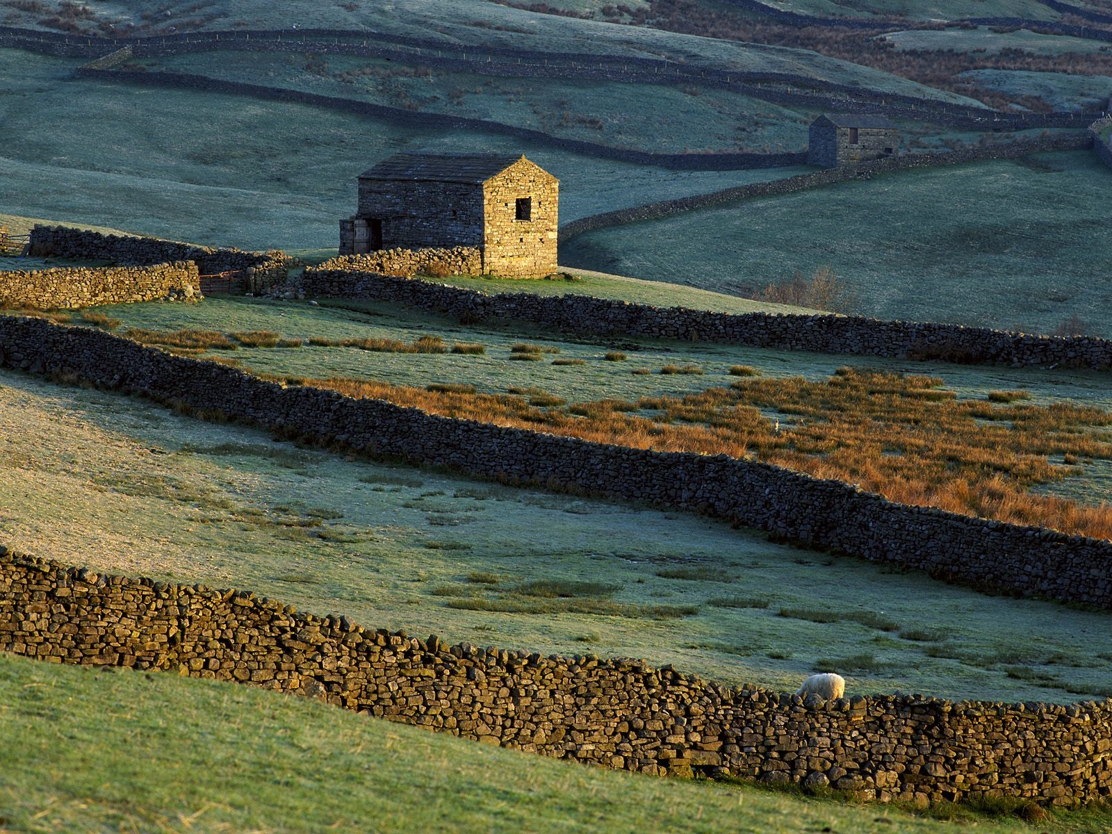 Stone house, fence, grass, sheep 1600x1200 wallpaper