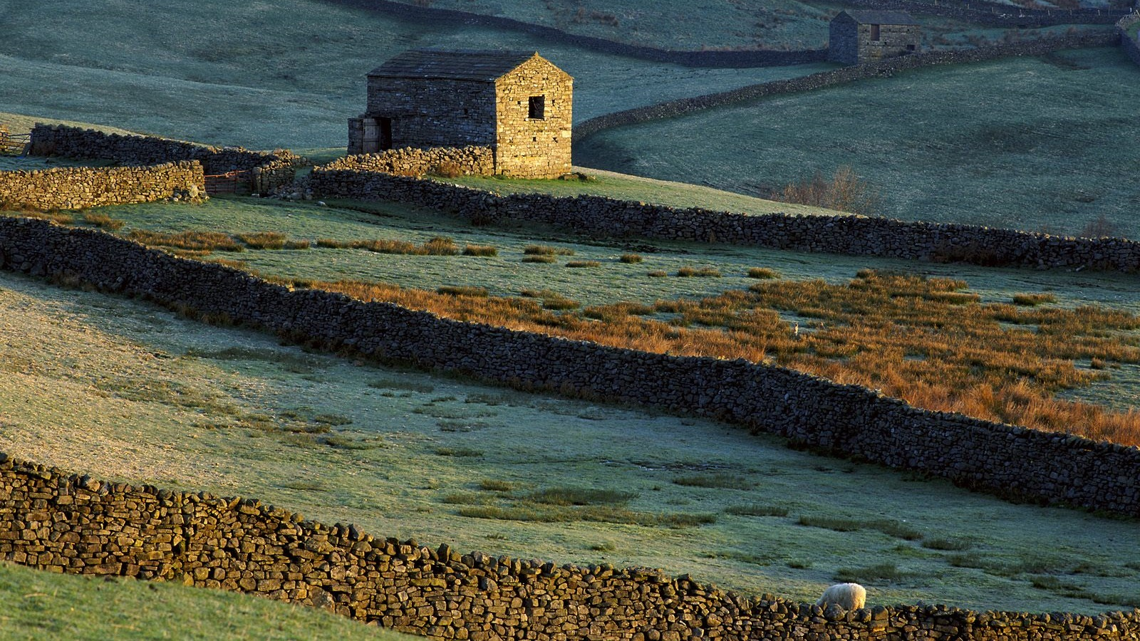 Stone house, fence, grass, sheep 1600x900 wallpaper