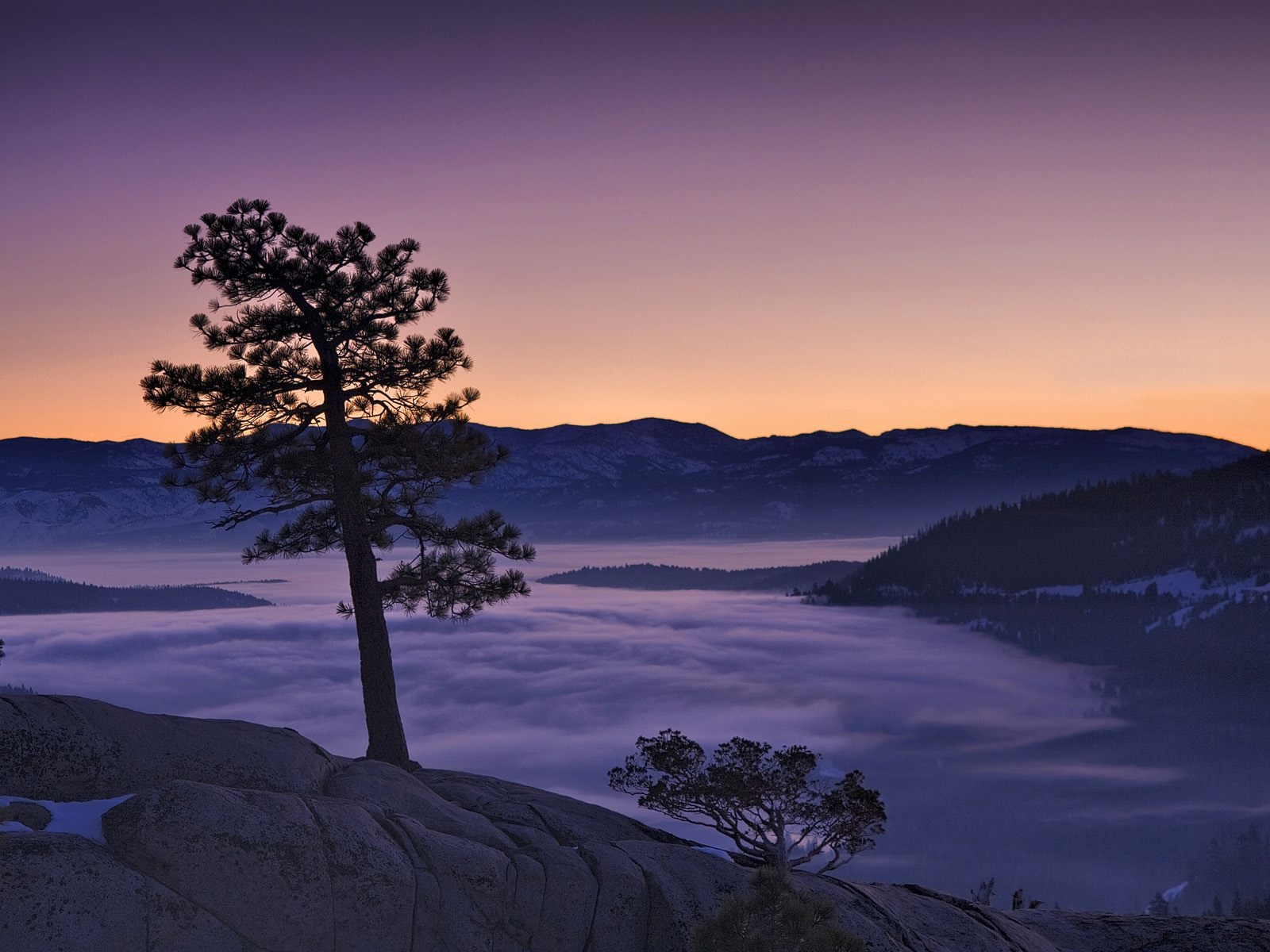Tree, fog, mountains, dawn 1600x1200 wallpaper
