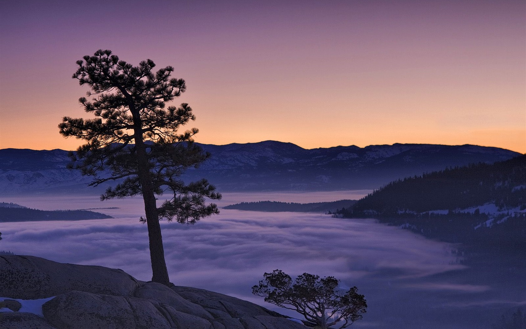 Tree, fog, mountains, dawn 1680x1050 wallpaper