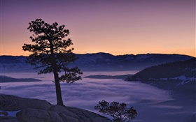 Tree, fog, mountains, dawn HD wallpaper