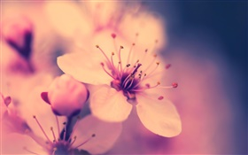 Flower close-up, retro style HD wallpaper