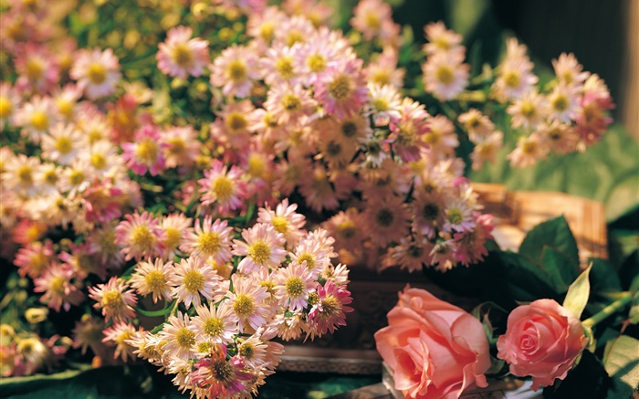 Pink flowers, rose and chamomile Wallpapers Pictures Photos Images