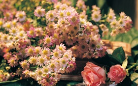 Pink flowers, rose and chamomile