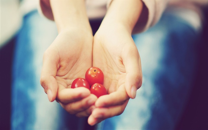 Small tomato in hands Wallpapers Pictures Photos Images