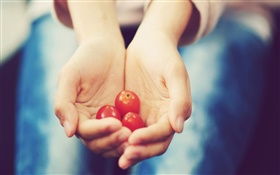 Small tomato in hands HD wallpaper