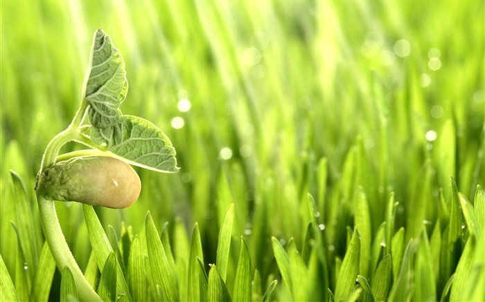 Spring, grass, sprout, green Wallpapers Pictures Photos Images