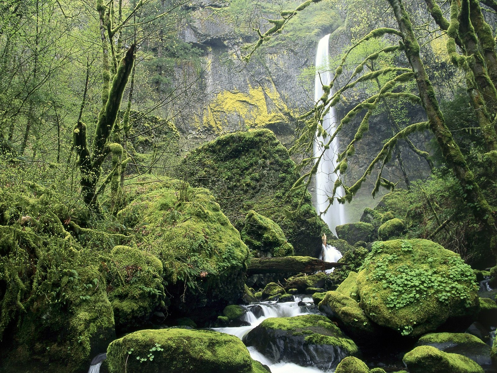 Waterfall, moss, stones, trees 1600x1200 wallpaper