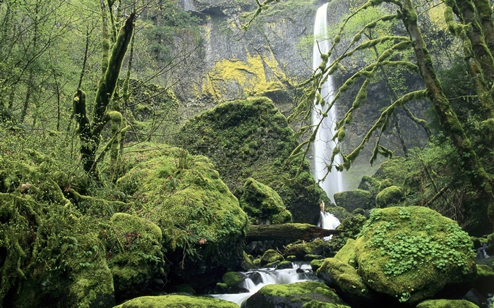 Waterfall, moss, stones, trees Wallpapers Pictures Photos Images