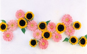 Yellow sunflowers, pink chamomiles HD wallpaper