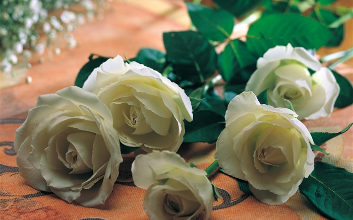 White rose flowers Wallpapers Pictures Photos Images