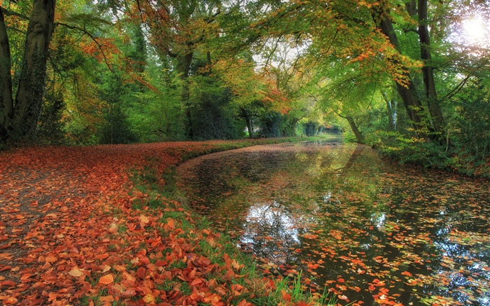 Autumn, river, trees, forest Wallpapers Pictures Photos Images