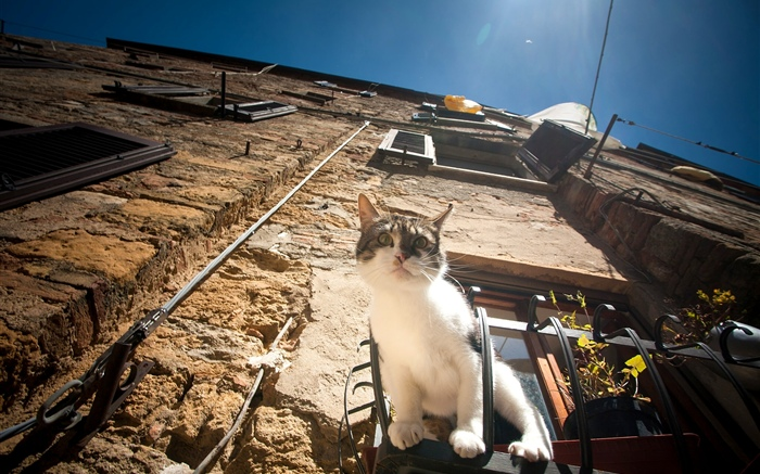 Cat sit at window to observation Wallpapers Pictures Photos Images
