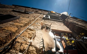 Cat sit at window to observation HD wallpaper