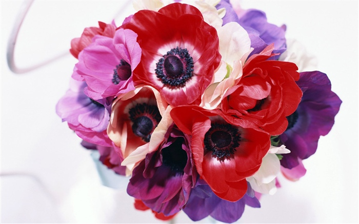 Different colors flowers, white, pink, purple, red Wallpapers Pictures Photos Images
