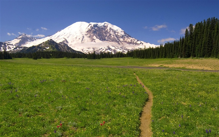 Grass, tree, path, mountain, snow Wallpapers Pictures Photos Images