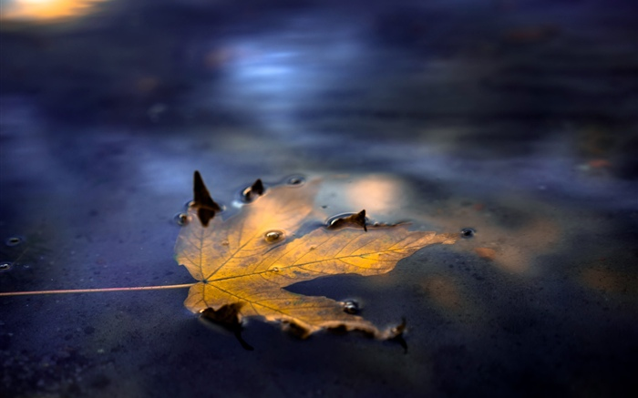 One yellow maple leaf, water, street Wallpapers Pictures Photos Images