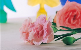 Pink carnations close-up HD wallpaper