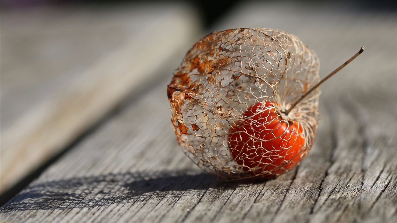 Plants fruit, physalis, wood board 1366x768 wallpaper