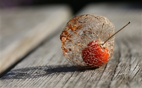 Plants fruit, physalis, wood board HD wallpaper