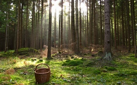 Austria, forest, trees, basket HD wallpaper