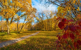 Autumn, trees, yellow leaves, path HD wallpaper