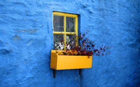Blue wall, window, flowers HD wallpaper