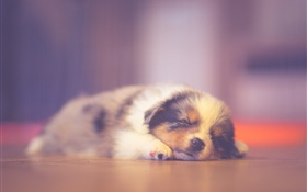 Cute puppy sleeping, dreaming HD wallpaper
