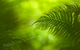 Green fern leaves, nature HD wallpaper