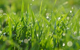 Green grass, water droplets, summer HD wallpaper