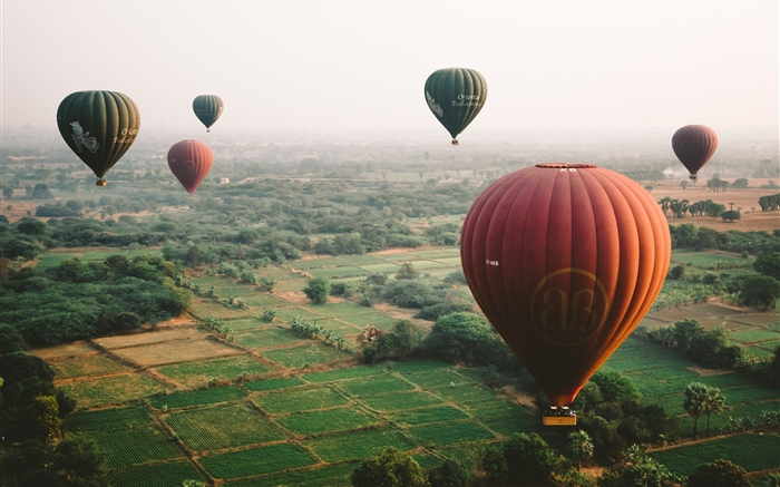 Hot air balloons, sky, fields Wallpapers Pictures Photos Images