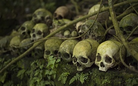 Many skulls, moss, horror HD wallpaper