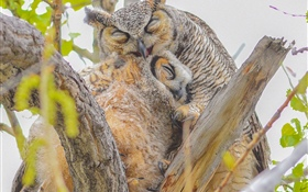 Owls, family, tree HD wallpaper