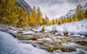 Winter, snow, trees, creek HD wallpaper