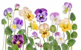Colorful flowers, white background