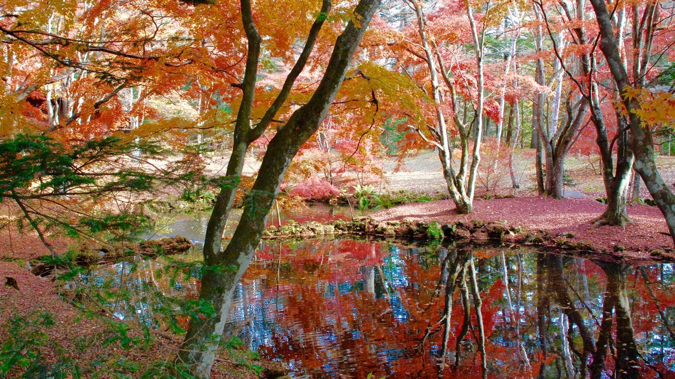 Trees, pond, park, autumn 1366x768 wallpaper