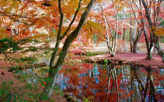 Trees, pond, park, autumn Wallpapers Pictures Photos Images
