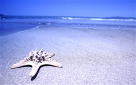 Beach, starfish, sea HD wallpaper